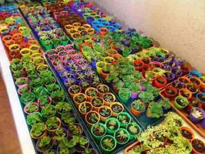Recuerdos De Bautizo Con Cactus.Recuerdos Cactus Bautizo Anuncios Enero Clasf