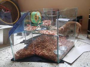 Casa de hamster dos niveles