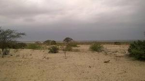 Terreno 9 hectáreas en castilla - piura - cod. 66