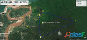 Terreno maderable 43.20 hectáreas en tipishca   san martín