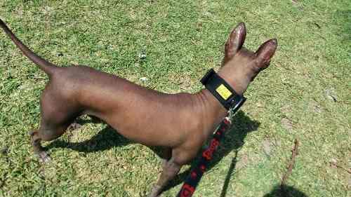 07cc922b509d Collar acolchado perro   ANUNCIOS Mayo