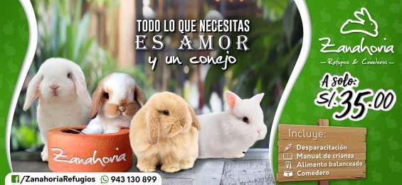Conejos mascota: mini lop, cabeza de leon, enano holandes en