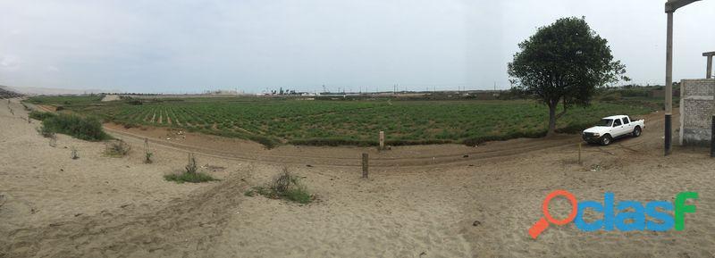 Gran terreno de 21.21 has   $300,000/has   valle de moche, trujillo