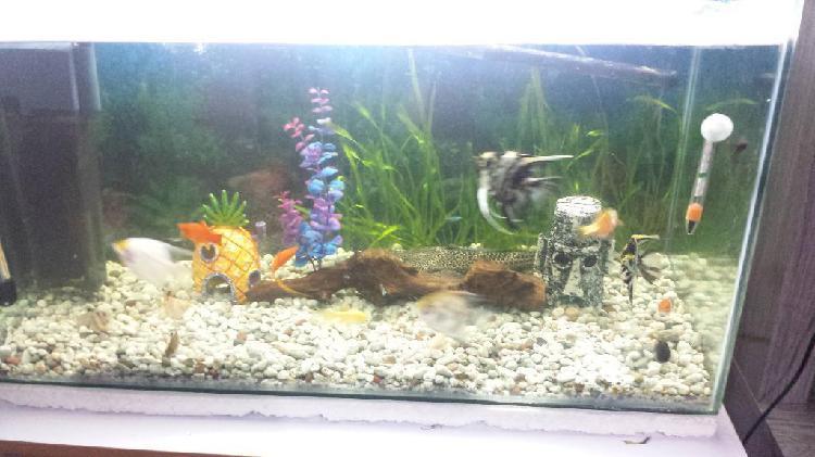 Remato pecera y peces