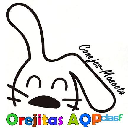 Conejos mascota arequipa   orejitas aqp