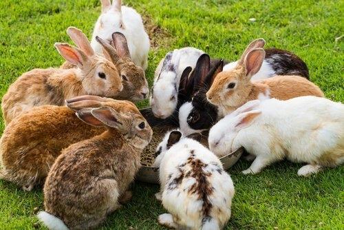vendo conejos grandes