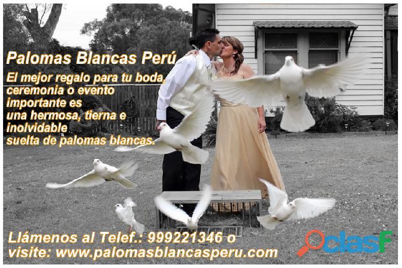 Palomas blancas alquilamos para soltar en eventos y ceremonias lima peru