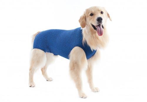 Ropa post-quirúrgica para castración perros machos-pet med