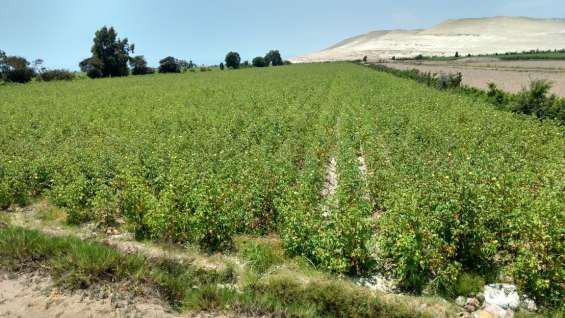 Terreño cañete imperial 2 hectareas en cañete