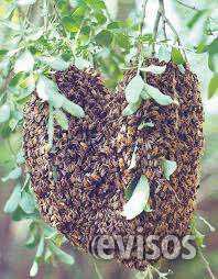 Fumigaciones contra abejas