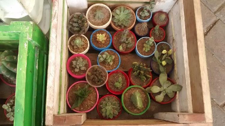 Vendo Cactus,suculentas Y Plantas