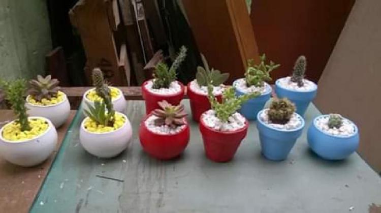Vendo Plantas,cactus,suculentas Variados