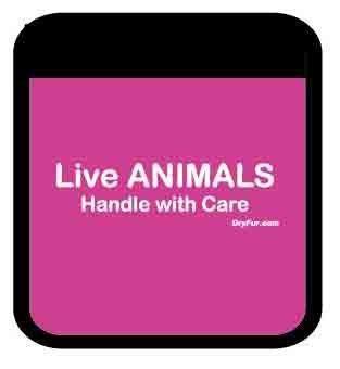 Asideros de mascotas para mascotas animales vivos conjunto