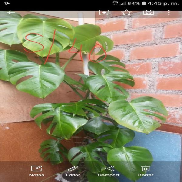 Venta de Plantas Ornamentales