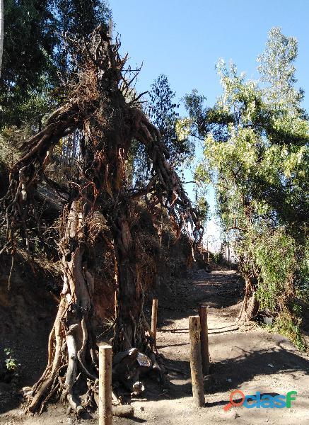 Bosque de los ents huasao cusco, parque natural y atractivo turistico