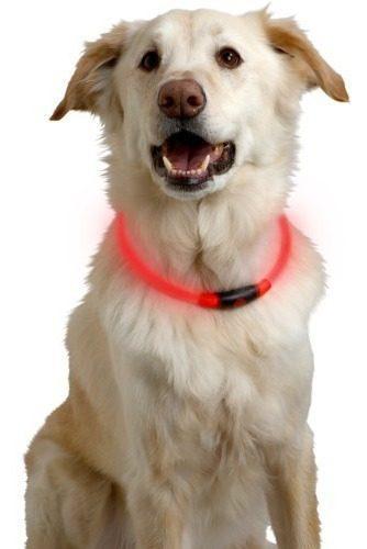 Collar luz led usb recargable perro mascota