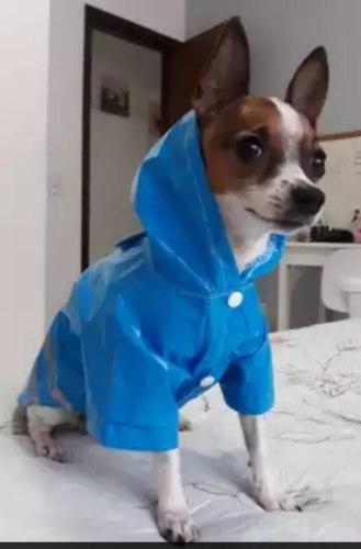 Perro ropa chubasquero impermeable con capucha