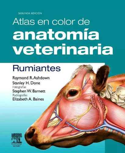 Atlas a color anatomía veterinaria rumiantes envío digital