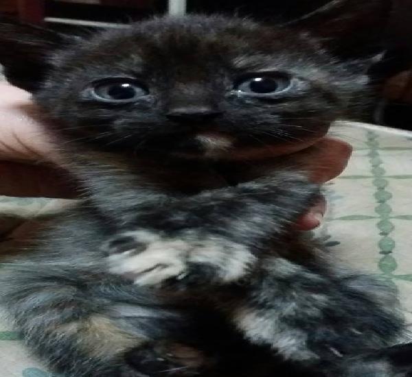Regalo gatito macho y hembra