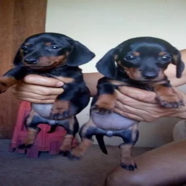 Salchichas Cachorritos