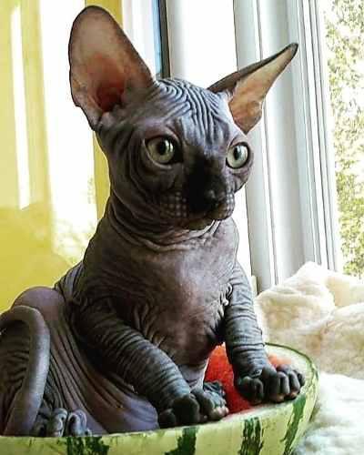 Animal mascota
