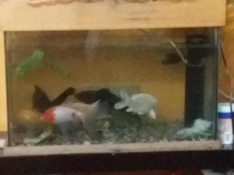 Pecera completa con peces incluidos