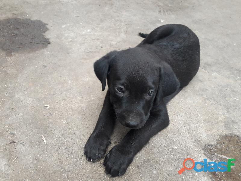 Adopcion de cachorros de 2 meses
