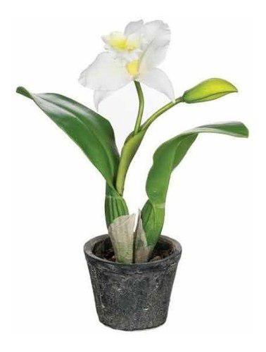 Orquídeas catttleya planta interior decorativa