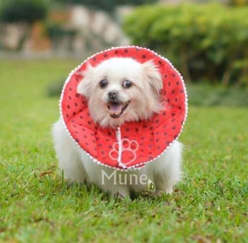 Collares isabelinos suaves para perros pequeños