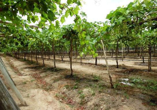 Gran oportunidad de inversión - venta de fundo agrícola de