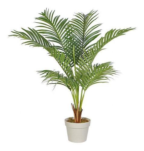 Hermosas plantas ornamentales de interiores y exteriores