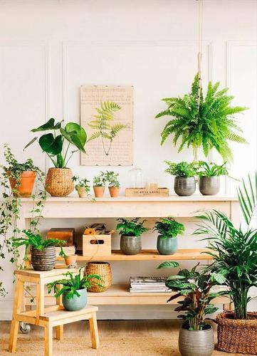 Plantas ornamentales decorativas de interiores y exteriores.