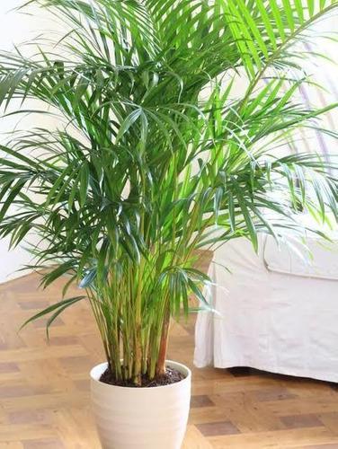 Plantas ornamentales decorativas para interior y exteriores