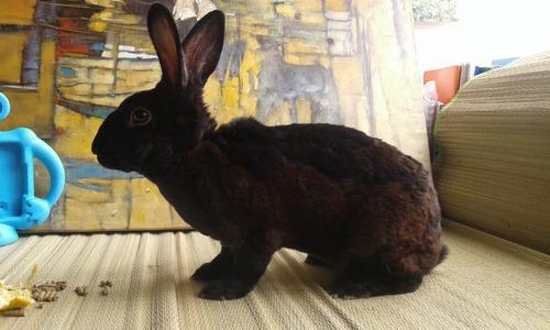 Conejos enanos tiernas mascotas