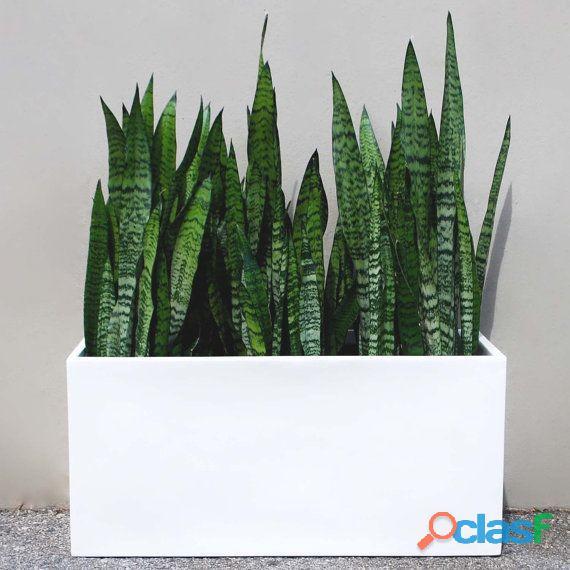 macetas decorativas, macetas decorativas para interiores, plantas para interiores 5