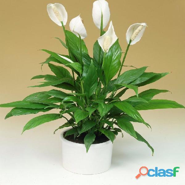 macetas decorativas, macetas decorativas para interiores, plantas para interiores 8