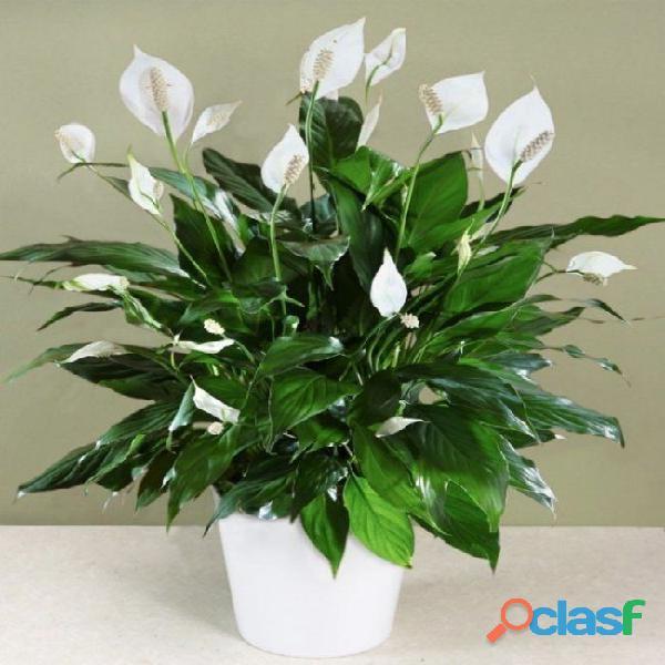 macetas decorativas, macetas decorativas para interiores, plantas para interiores 9