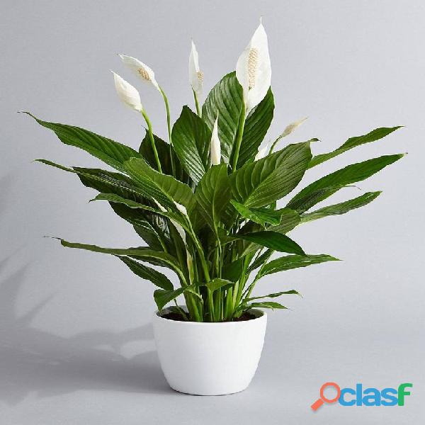 macetas decorativas, macetas decorativas para interiores, plantas para interiores 10