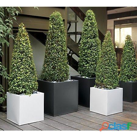 macetas decorativas, macetas decorativas para interiores, plantas para interiores 12