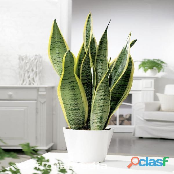 macetas decorativas, macetas decorativas para interiores, plantas para interiores 17