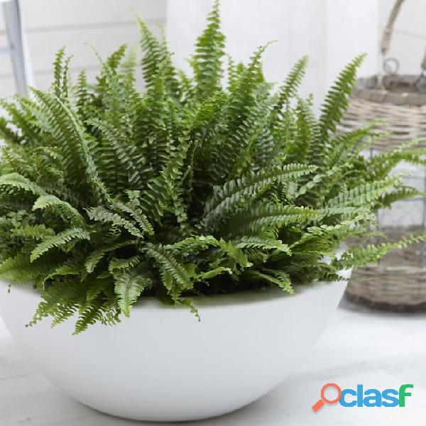 macetas decorativas, macetas decorativas para interiores, plantas para interiores 19